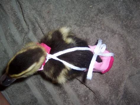 Diy Duck Diaper